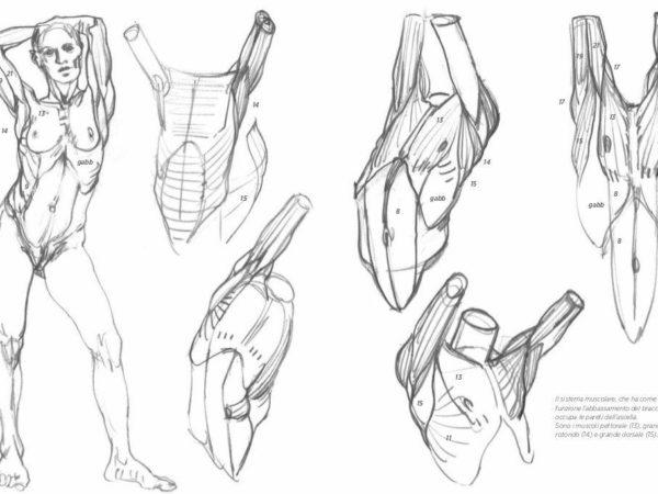 corso di disegno anatomia artistica